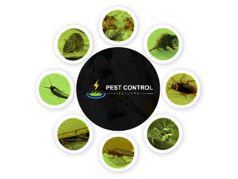 Pest Control Bellara
