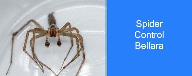 Spider Control Bellara